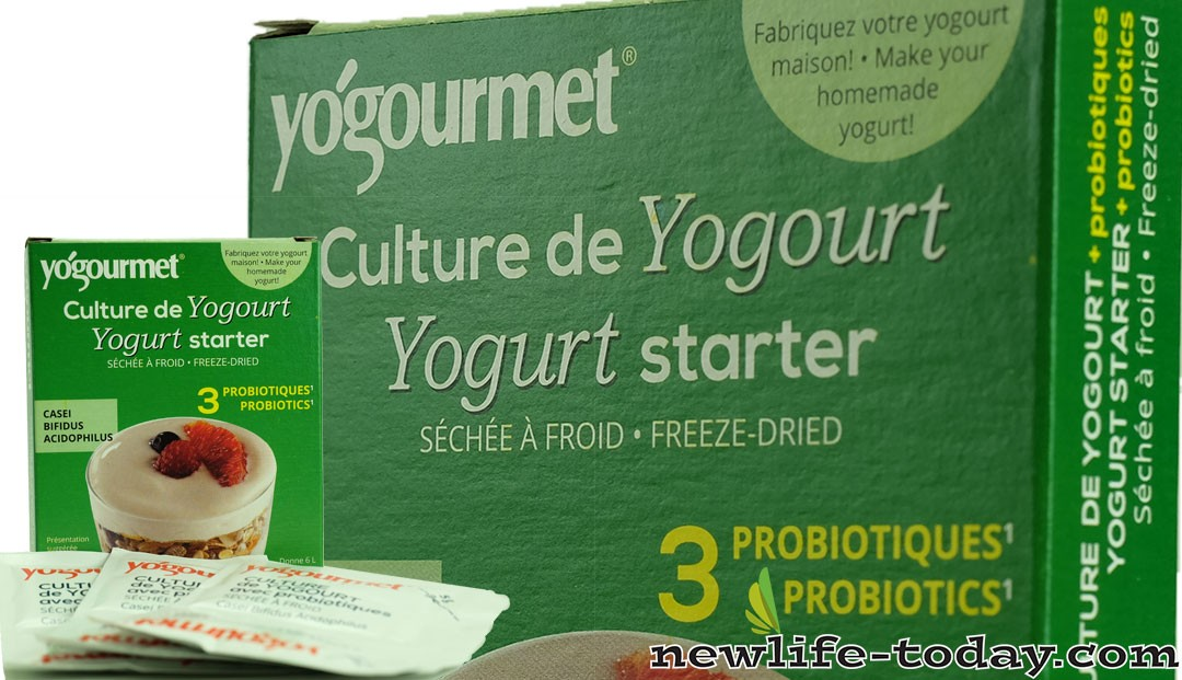 Lactic Bacteria found in Yoghurt Starter